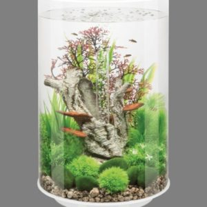 Acquario Biorb Tube